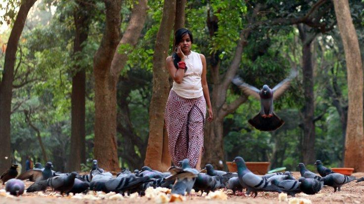pigeons02
