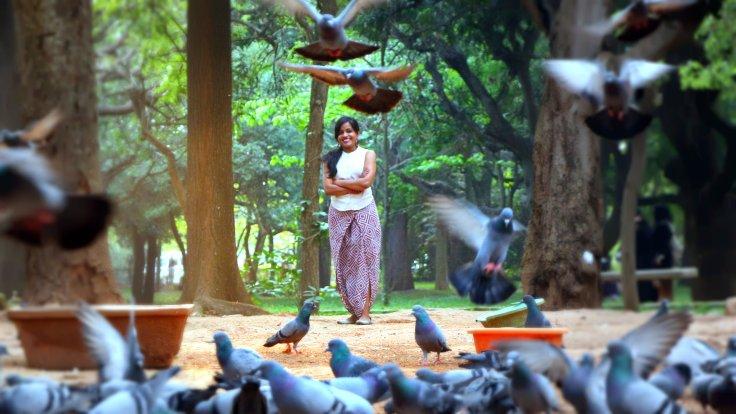 Pigeons1 done