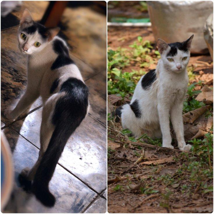 collage cat