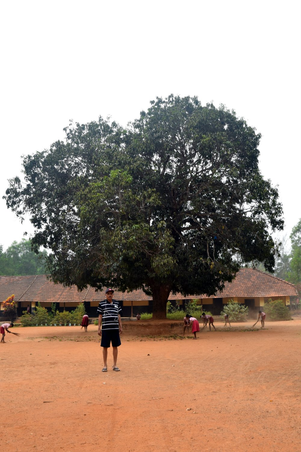 the-great-central-tree